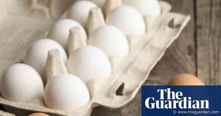 Beak-trimming and brutality: is it time to stop buying brown eggs?