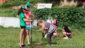 Todos ayudaron y ahora El Cadillal tiene 500 árboles nuevos - el tucumano