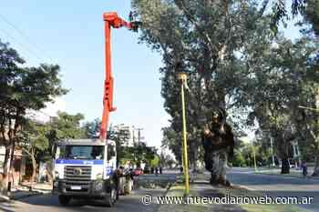 El municipio realiza poda en gran altura de eucaliptus del parque Aguirre - Nuevo Diario de Santiago del Estero