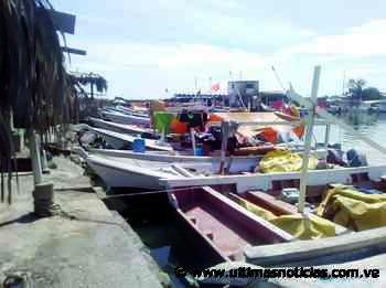 Pescadores del muelle La Zorra preparan su feria en Catia La Mar - Últimas Noticias