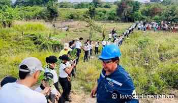 Exitosa jornada de reforestación se cumplió en Campoalegre - Noticias