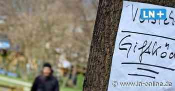 Hunde - Dieses Mal in Langenfelde: Schon wieder Giftköder in Bad Schwartau gefunden - Lübecker Nachrichten