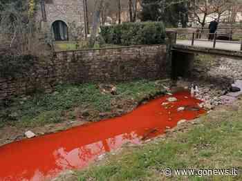 Il borro di Uzzano si tinge di rosso: lo stupore a Greve in Chianti - gonews.it - gonews