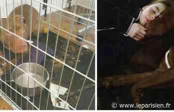 Chevilly : la chienne Léa sauvée après un an de combat judiciaire - Le Parisien