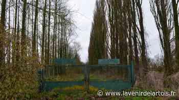 Vitry-en-Artois : l'ancienne décharge au cœur d'une réflexion municipale - L'Avenir de l'Artois
