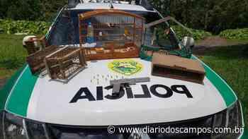 Diário dos Campos | Polícia recupera pássaros silvestres em Imbituva - Diário dos Campos