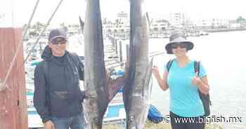 Dos marlines rayados reporta Bibi Fleet Sportfishing - Big Fish