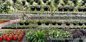 Venda de flores em evento de Holambra será revertida para o Centro Boldrini - Diário do Turismo