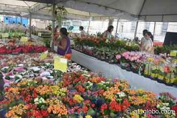 Com mais de 100 espécies, Festival de Flores e Plantas de Holambra é realizado em Formiga - G1