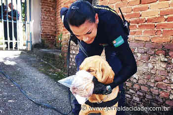 Cão da GMJ localiza jovem desaparecida em Serra Negra - Jornal da Cidade - Jundiaí
