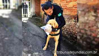 A seguir Corpo de jovem é encontrado por cão da GMJ em Serra Negra - Tribuna de Jundiaí