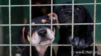 Russian Animal Activists Angered Over Killing Of 100 Dogs, Cats In Yakutsk - Radio Free Europe/ Radio Liberty