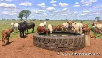 """Conheça o """"bebedouro ecológico"""" que está ganhando fama no Brasil - Canal Rural"""