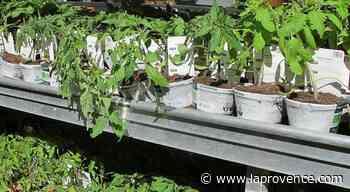 Venelles : manger durable de la graine à l'assiette - La Provence