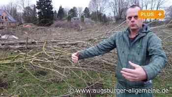 Ärger in Bobingen über gefällte Bäume auf dem TSV-Gelände - Augsburger Allgemeine