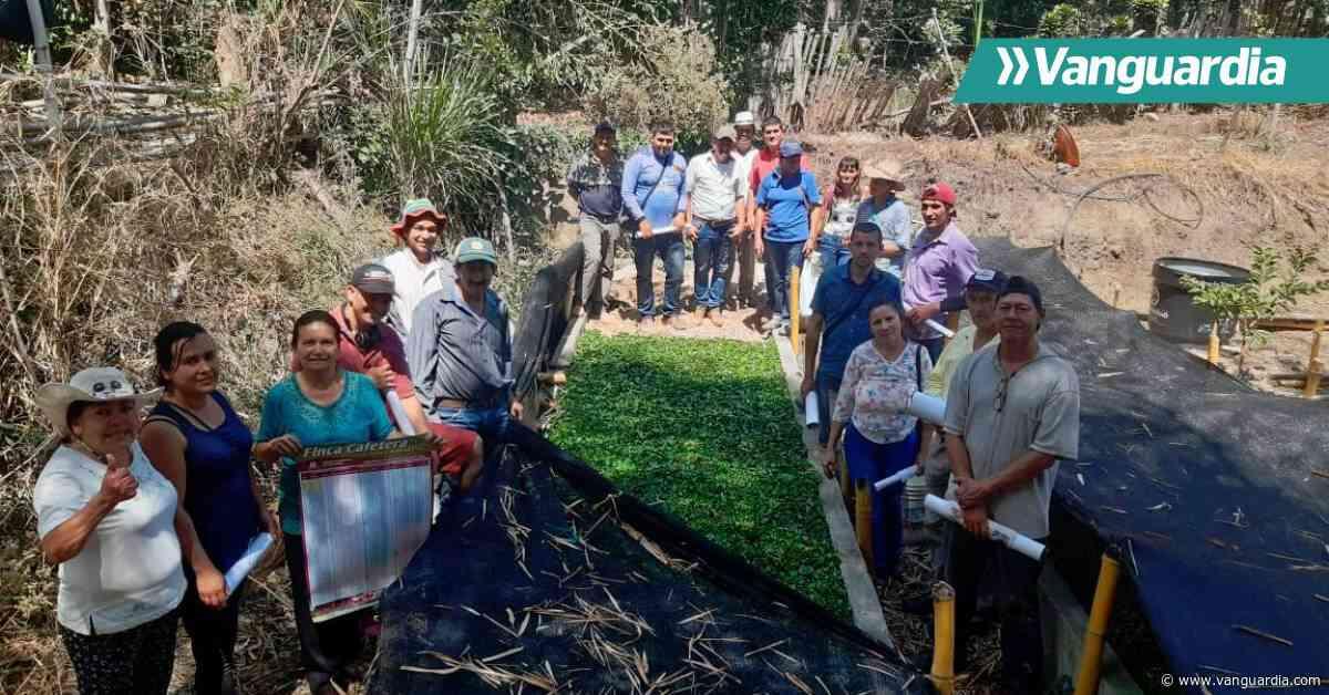 Cafeteros de Aratoca listos para renovar sus cultivos - Vanguardia