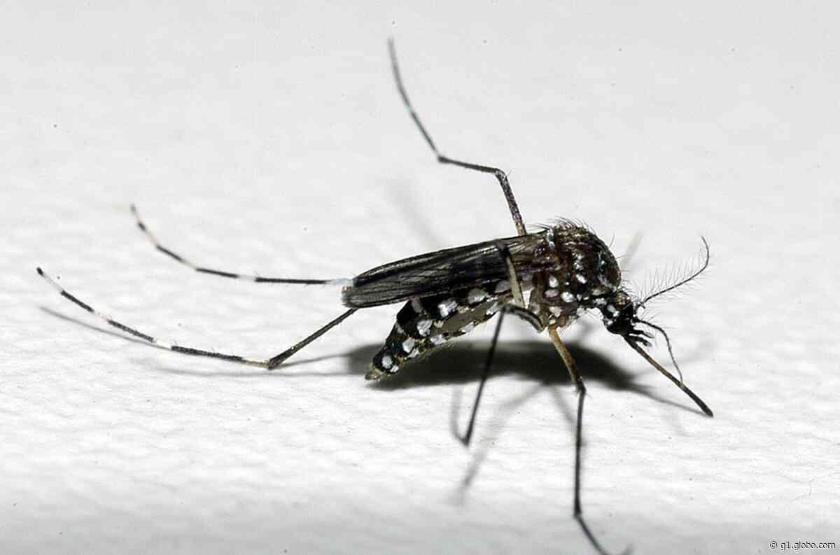 Com duas mortes confirmadas por dengue, Mococa já soma 1,81 mil casos da doença - G1