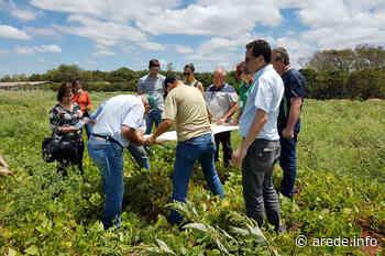 Produtores dos Campos Gerais têm média superior à nacional - ARede