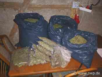Polizei Ostrach Drogen: Riesige Haschplantage mit mehr als 600 Cannabis-Pflanzen entdeckt - SWP