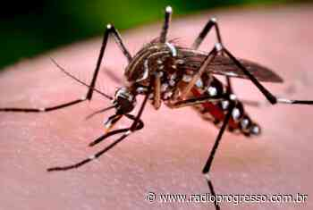 Santo Ângelo e Cerro Largo lideram casos de dengue na região das Missões - Rádio Progresso de Ijuí