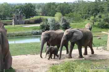 Près de Toulouse. Le Zoo African Safari de Plaisance-du-Touch a un grand projet d'extension - Actu Toulouse