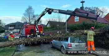 Baum stürzt in Osterholz-Scharmbeck auf Auto - WESER-KURIER