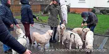 Sieben Hunde fallen aus fahrendem Auto in Harsum - www.hildesheimer-allgemeine.de