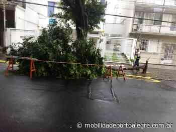 Queda de galhos de grande porte bloqueia faixa da Avenida Anita Garibaldi - Mobilidade Porto Alegre
