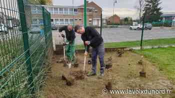 À Hallennes-lez-Haubourdin, des arbres replantés près de l'école Loridan - La Voix du Nord