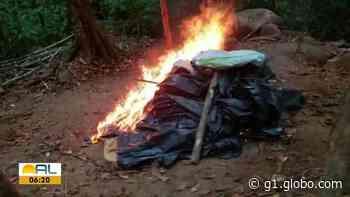 ICMBio flagra acampamento utilizado para caça irregular em Murici, AL - G1
