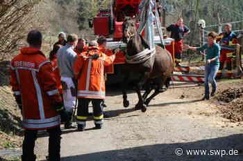 Feuerwehr Oberrot und Gaildorf: Feuerwehr rettet Pferd aus Güllegrube - SWP