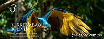 Rurrenabaque es uno de los mejores lugares para visitar en 2020, según un ranking del New York Times - EL DEBER