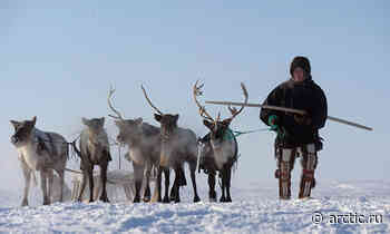 Meat standards: Naryan-Mar reindeer breeders and vets review rules for exporting meat to Europe - Arctic.ru
