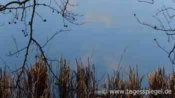 Ausflug nach Wandlitz: Der beste See im C und Honeckers geheimer Garten - Tagesspiegel