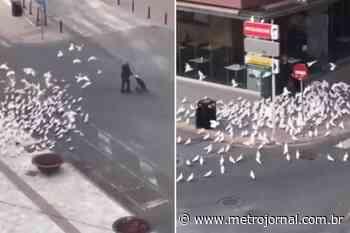 Gravam momento em que mulher é perseguida por pombos famintos devido à quarentena - Metro Jornal