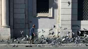 Câmara do Funchal aprova plano para abate de pombos no centro da cidade - Notícias ao Minuto
