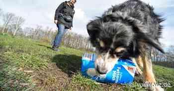 Umweltschutz mal anders - Hündin Amy aus Viersen sammelt gerne Müll auf - Westdeutsche Zeitung