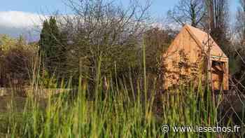Une réserve écologique en plein coeur d'Epinay-sur-Seine - Les Échos
