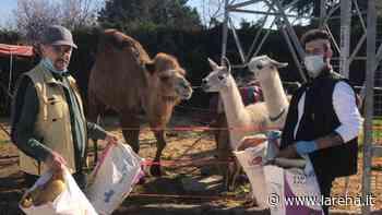 Gara di solidarietà per gli animali del circo Orfei - L'Arena