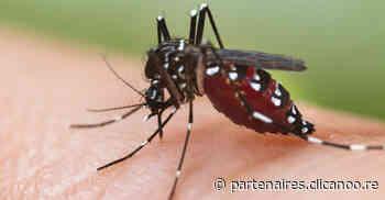 218 cas de dengue en une semaine à La Reunion | Vis ma ville Saint-Paul - Clicanoo
