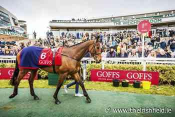 Goffs clarify status of upcoming auctions - The Irish Field