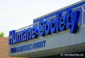 Humane Society Suspending All Adoptions - windsoriteDOTca News
