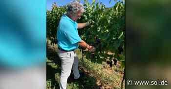 Weingut Petgen-Dahm in Perl als bester Weinproduzent ausgezeichnet - sol.de