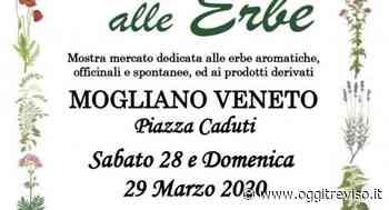 Salute alle Erbe a Mogliano Veneto. | Oggi Treviso | News | Il quotidiano con le notizie di Treviso e Provincia - Oggi Treviso