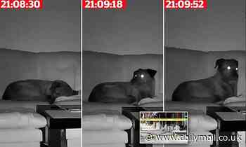 Home surveillance video captures dog sensing 5.7 magnitude earthquake moments before it struck Utah
