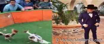 Por falta de denuncia, Ayuntamiento de Santiago Tuxtla no intervendrá por pelea de gallos en fiesta privada - La Silla Rota