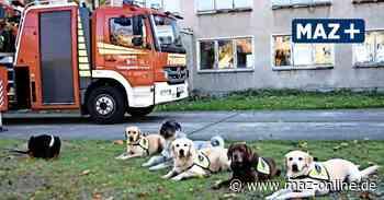 Spende - Finanzhilfe für die Feuerwehr-Hundestaffel - Märkische Allgemeine Zeitung