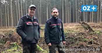 Wegen Corona: Pflanzaktion bei Franzburg ohne Helfer - Ostsee Zeitung