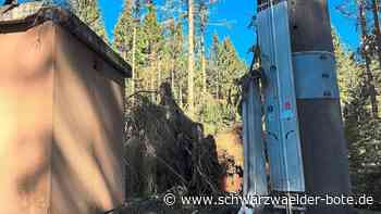 Furtwangen: Rohrbach ist nach sechs Wochen Zwangspause wieder im Mobilfunknetz - Furtwangen - Schwarzwälder Bote