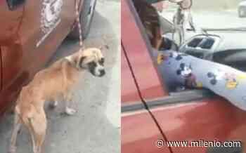Ubican a mujer que arrastró a perro en Matamoros, dijo que lo llevaba a la veterinaria - Milenio